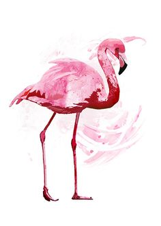 Flamingo - Original Art Print - Bird - water color - 5 x 7 - Archival paper - great for gifting or personal collection. $20.00, via Etsy.