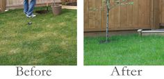 Organic Lawn Care: Corn Gluten instead of harmful to your health and environment chemical fertilizers.