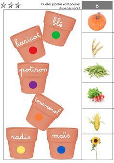 Que peut-on planter en septembre ? quelles activités en maternelle avec des graines ? de très jolies réponses sur le blog de Maternailes ...