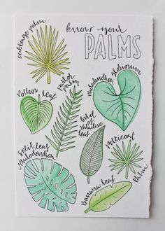 Palms Wall Art ~ Palm Tree ~ Types of Palm ~ Tropical painting ~ floral illustration ~ palm tree doodle ~ island art ~ bird of paradise – tree Doodle Drawings, Easy Drawings, Doodle Art, Bird Doodle, Bullet Journal Aesthetic, Bullet Journal Notebook, Bullet Journal Leaves, Palm Tree Types, Palm Tree Art