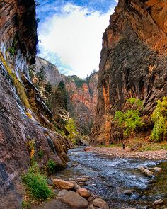 Narrows Bottom-Up Hike - Zion National Park, Utah The Narrows Zion, Narrows Zion National Park, Hiking The Narrows, Utah Parks, Local Parks, Places To Travel, Places To See, Dream Vacation Spots, Honeymoon Planning