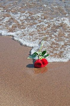 A single red rose by VoyageVisuel Cute Wallpaper Backgrounds, Flower Wallpaper, Cute Wallpapers, Iphone Wallpaper, Beautiful Wallpaper, Aesthetic Roses, Single Red Rose, Beautiful Roses, Belle Photo