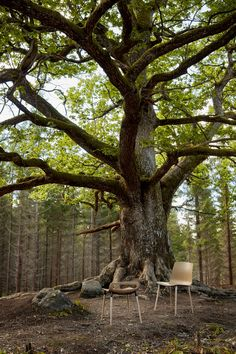 """Unseen seating comfort"" #pichair #piiroinendesign under the amazing oak tree"