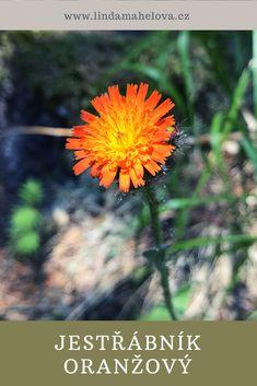 Pharmacy, Flowers, Plants, Garden, Honey, Garten, Planters, Royal Icing Flowers, Gardening
