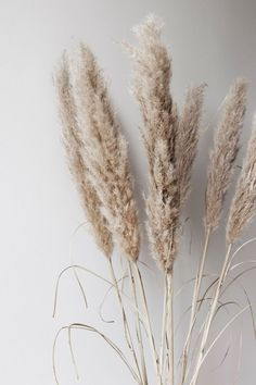 subtle neutral colors - Neutral and Clean Website Design - Flower Wallpaper Backgrounds, Iphone Wallpaper, Floral Wallpapers, Blog Backgrounds, Beige Aesthetic, Aesthetic Plants, Pampas Grass, Dried Flowers, Brown Flowers