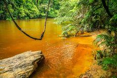Jungle swing in Malaysia - Stock Photo - Images Download here : https://photodune.net/item/jungle-swing-in-malaysia/20094393?s_rank=233&ref=Al-fatih