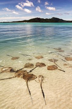 Whitehaven Beach, Queensland.