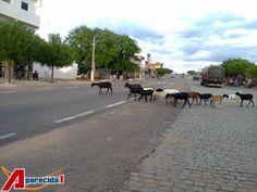 Animais andam pelas ruas de Aparecida (PB)