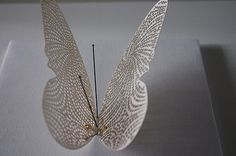 gallery   Biomimetic Butterflies I the barbarian group