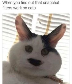 They Do - World's largest collection of cat memes and other animals Funny Animal Memes, Cute Funny Animals, Funny Cute, Cute Cats, Hilarious, Funny Stuff, Memes Humor, Funny Memes, Avengers