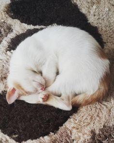 2 AYLIK SÜTLAÇ GÖRÜYOR MIRIL MIRIL KUCAK DELİSİ OYUNCU ACİL Cats, Animals, Gatos, Animales, Animaux, Animais, Kitty, Cat, Animal