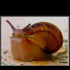 Snail!!!