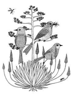 Cactus Wrens by Geninne D Zlatkis
