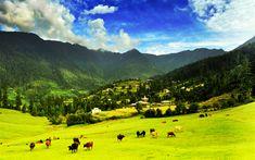 Download wallpapers Great Himalayan National Park, 4k, mountains, pastures, cows, Himalayas, GHNP, India
