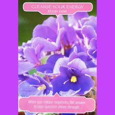 The African Violet letting you know that it's time to release any negative energy that may be exacerbating a problem.  So this weekend is the perfect time to cleanse negative vibrations using incense or a smudge stick or maybe my Space spray http://barbarabiziou.com/products/aromatherapy-sprays/ and try to do something creative.  #DoreenVirtue  #flowers #Oraclecards