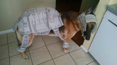 This dog who doesn't care about your stupid fandom because THIS OUTFIT DOESN'T EVEN FIT.   26 Dogs Who Hate Their Halloween Costumes