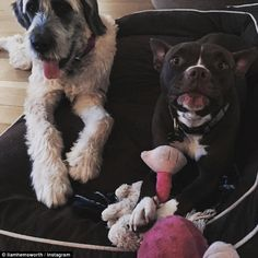True loves: The two dogs, a brown bulldog called Tani and big labradoodle Dora, frequently appear on the 26-year-old's social media and have been described as his 'true loves'