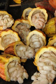Cacao pods are manually harvested and broken in half to extract the beans. The harvest is from November to December, and again in April to June.