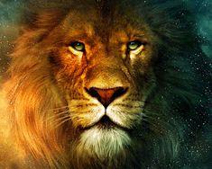 pictures of aslan the lion | Aslan Lion 1600x1280 free Screensaver wallpaper
