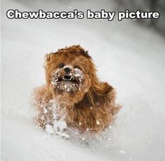 Chewbacca..as a Baby!