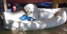 Hundebett inap Mod.7 Kunstleder creme Memory Foam, Creme, Dogs, Animals, Big Dogs, Upholstery Fabrics, Artificial Leather, Cool Dog Beds, Mattress