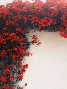 For shed / Melody Hansen Red Wallpaper, Wallpaper Backgrounds, Iphone Wallpaper, Red Flower Wallpaper, Flower Aesthetic, Red Aesthetic, Aesthetic Backgrounds, Aesthetic Wallpapers, Flower Backgrounds