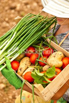 Farmer carrying chest of vegetables Royalty Free Stock Photo