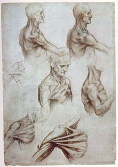 Leonardo Da Vinci - Muscles of the neck and shoulders, ca 1515.