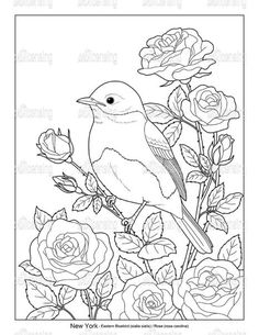 Bird Drawings, Art Drawings Sketches, Animal Drawings, Easy Drawings, Colorful Drawings, Bird Coloring Pages, Adult Coloring Pages, Coloring Books, Floral Embroidery Patterns