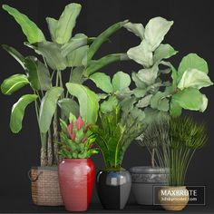 Collection of plants 75 Small Plants, Indoor Plants, Thuja Occidentalis, Florence Art, Boconcept, Melaleuca, Modern Bedroom, Hydrangea, Pottery Barn