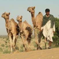Adventure Camel. JAISALMER RAJASTHAN, India.