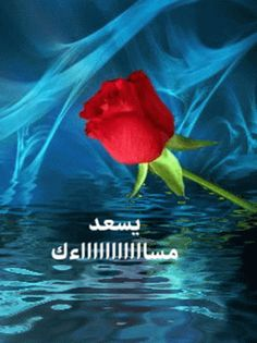 The perfect SweetDreams MyLove Rose Animated GIF for your conversation. Discover and Share the best GIFs on Tenor. Good Morning Arabic, Good Morning Coffee, Good Morning Gif, Sweet Dreams My Love, Beautiful Morning Messages, Evening Quotes, Evening Greetings, Bubbles Wallpaper, Hearts And Roses