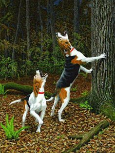 Make sure you are informed of what flea treatments you are using for your dog ** You can get additional information at the image link. Bear Hunting, Hunting Art, Hunting Humor, Walker Hound, Hog Dog, Dog Tree, Treeing Walker Coonhound, Golden Retriever, The Fox And The Hound