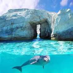 Find images and videos about summer, blue and nature on We Heart It - the app to get lost in what you love. Orcas, All Gods Creatures, Sea Creatures, December Holidays Around The World, Best Summer Holiday Destinations, Voyager Loin, Aquarium, Landscape Illustration, Illustration Art