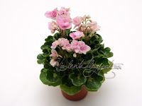 Goldilocks (L.Ray) Double pink/green-white edge. Variegated girl foliage. Miniature. Махровые розовые цветы с зелено-белой каймой. Гел-листва с кроновой пестролистностью. Миниатюра.