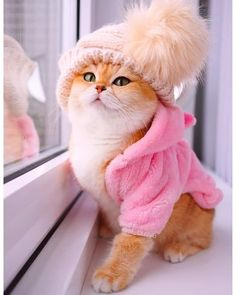 Time To Know More and more: 7 Reasons Why Cats Are the Best Pets Baby Animals Super Cute, Cute Baby Cats, Cute Little Animals, Cute Cats And Kittens, Cute Funny Animals, I Love Cats, Kittens Cutest, Cute Dogs, Fluffy Kittens