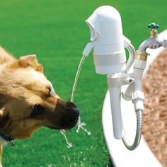 The Dog Activated Outdoor Fountain - Hammacher Schlemmer. My puppies would love this :) Dog Water Fountain, Drinking Fountain, Drinking Water, Cool Technology, Outdoor Dog, Outdoor Ideas, Outdoor Living, Cool Inventions, Dog Accessories