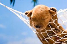 11 Dog-Friendly Hotels that Pamper your Pet Slideshow Baby Animals, Cute Animals, Animal Babies, Wild Animals, Dog Friendly Hotels, Four Legged, Mans Best Friend, Dog Friends, Dog Love