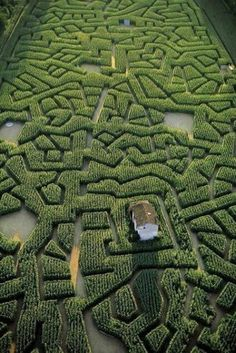AWESOME FARMER CORN MAZE - NOW THAT IS WELL DONE!