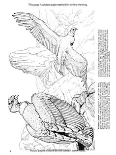 8fd292ebc6a8ab512cb22a55f5aaa9b8 including the art of nature coloring book 60 illustrations inspired by on the art of nature coloring book uk additionally birds of prey coloring book dover nature coloring book amazon on the art of nature coloring book uk besides redoute roses colouring book dover nature coloring book amazon on the art of nature coloring book uk as well as birds of prey coloring book dover nature coloring book amazon on the art of nature coloring book uk