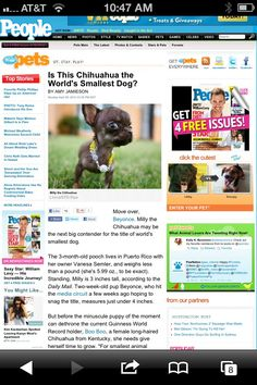 the best chihuahua breeder