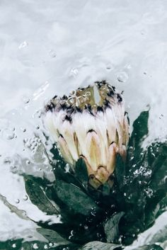 """Photographer Lisa Sorgini is the author or an ongoing series devoted to flowers and bouquets : """"Flotsam"""". She captures different kinds of flowers in bubbling water that produces a lot of little bubbles. The petals Different Kinds Of Flowers, Ethereal Beauty, Water Flowers, Natural Forms, Floral Bouquets, Photographic Prints, Belle Photo, Nature Photography, Flower Photography"""