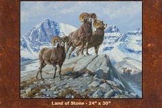 Dan Metz Art – Bighorn sheep painting