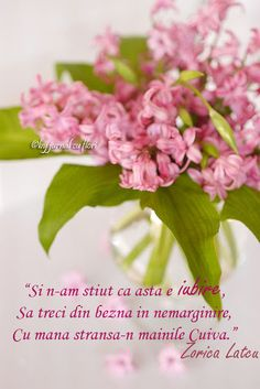 #citat #mesajdedragoste #poezie #zoricalatcu #iubire #ziuaindragostitilor #zambile #buchetflori Flower Qoutes, Beautiful Words, Peace And Love, Messages, Quotes, Plants, 8 Martie, Alba, Quotations