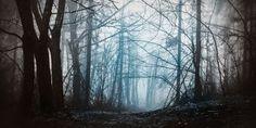 woodland backdrop