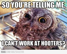 Skeptical owl.