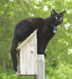 Bird Watch .