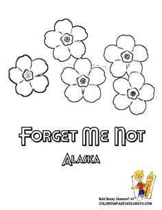 alaska state flower coloring page forget me not
