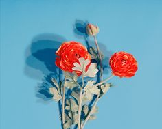 Photo by Mark Peckmezian † #flowers #flora #color #StillLife #MarkPeckmezian