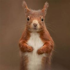 Red squirrels are AWESOME!